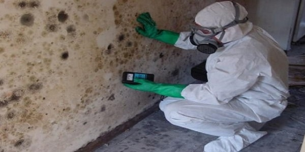 Mould Inspection services Ottawa