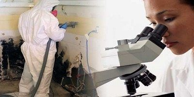 Mold Remediation Service