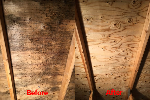 attic mold removal ottawa