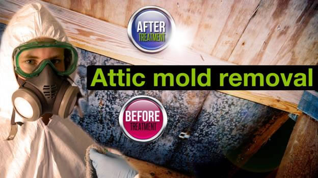removal of attic mould Ottawa