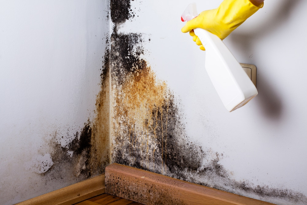 mould on wall removal ottawa