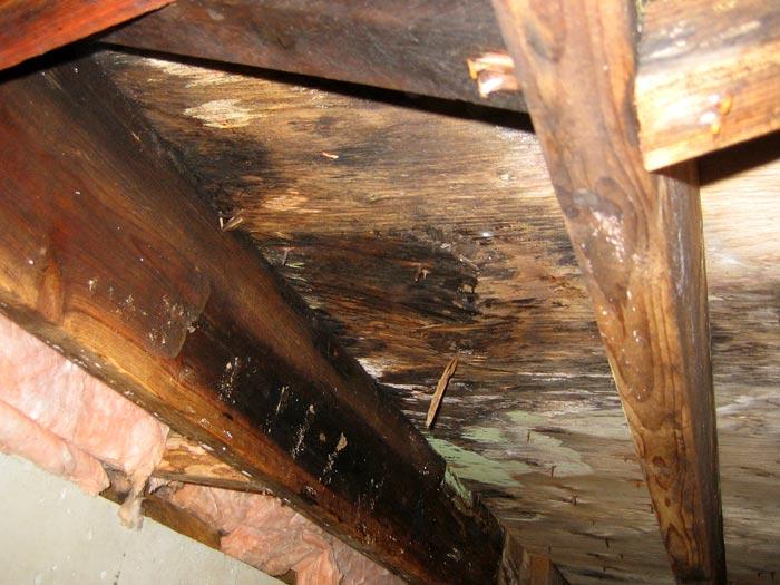 crawlspace mould removal services Ottawa